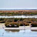 Humedales del Parque Nacional de Doñana. / Dospunto zero