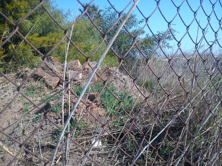 Teular de Mansio 16 mar 2015-4