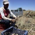 Un trabajador en tareas de campo.