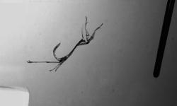 Un-video-revela-las-acrobacias-de-las-mantis_image648_365
