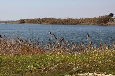 Una imagen de las Marismas del Guadalquivir. (Foto-Agencias).