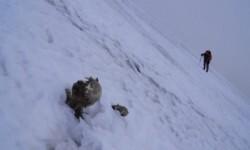 Uno de los montañeros que encontraron los restos se acerca a una de las momias para su investigación.