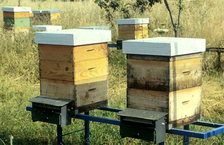 apicultores-valencianos