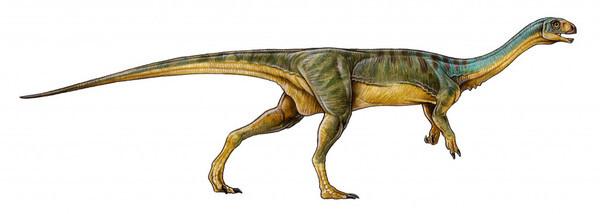 Chilesaurus-diegosuarezi-3-1024x366_imagelarge