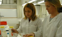 Comprobación y análisis de alimentos en un laboratorio. (Foto-Archivo)