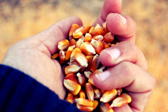 Domesticar-las-plantas-para-la-alimentacion-del-futuro_image_380 (1)