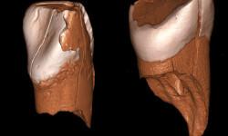 Dos-dientes-de-41.000-anos-de-edad-revelan-la-llegada-de-los-humanos-modernos-a-Europa_image_380