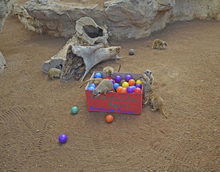 Expedición África Pascua 2015 - escuela de vacaciones de Bioparc Valencia - suricatas