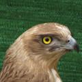 Fauna_de_El_Saler_18042015