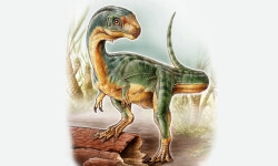 Hallado-en-Chile-un-dinosaurio-con-cuerpo-de-puma-y-manos-de-tiranosaurio_image_380