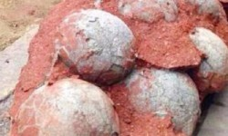 Un grupo de huevos de dinosaurios encontrados en China.
