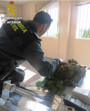 foto marihuana 3