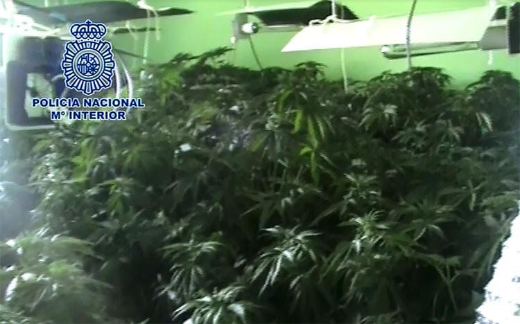 marihuana-jaen-01