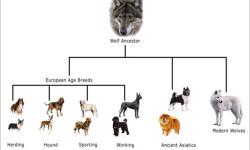 origen-perro