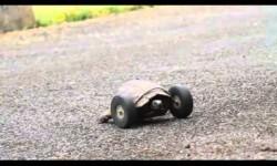 Video: tortuga anciana vuelve a caminar gracias a ruedas de juguete