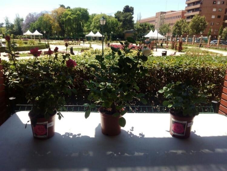 0520 Concurso rosa 5
