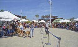 10 de mayo - 6º desfile solidario de perros abandonados - Plaza de BIOPARC Valencia