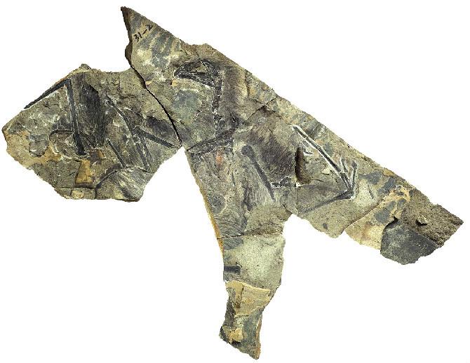 150429_dinosauriomurcielago_despieceedited