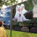 Exposición 'Salvajes' en el Retiro