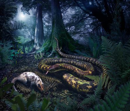 Que-forma-tenian-las-primeras-serpientes_image_380