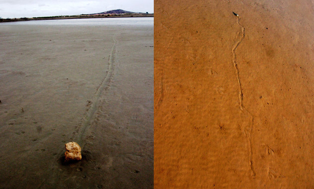 Tormentas-y-microbios-estan-detras-del-misterio-de-las-piedras-errantes_image_380