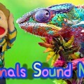 Animal sound Man, sonido de animales