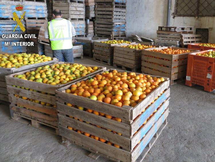 foto naranjas