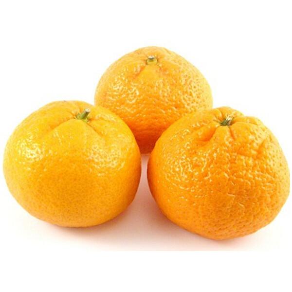 mandarina_satsuma_iwasaki_1