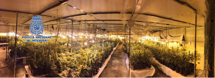 marihuana almazora