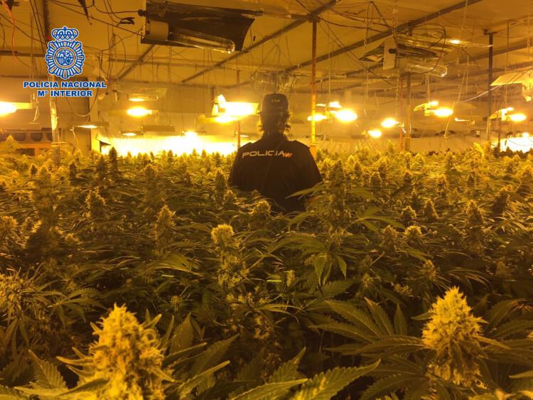 marihuana almazora2