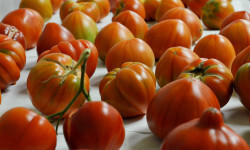 tomates TRADITOM