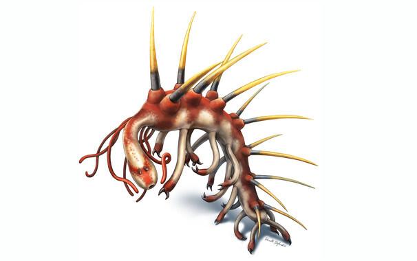 Asi-era-el-antepasado-de-la-mayoria-de-los-invertebrados_image_380