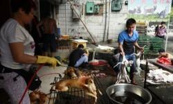 China sacrifica a miles de perros para el festival del horror (10)
