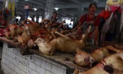 China sacrifica a miles de perros para el festival del horror (11)