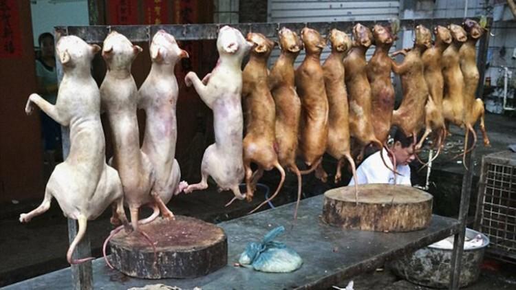 China sacrifica a miles de perros para el festival del horror (2)