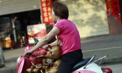 China sacrifica a miles de perros para el festival del horror (3)