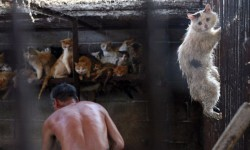China sacrifica a miles de perros para el festival del horror (4)