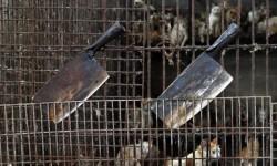China sacrifica a miles de perros para el festival del horror (6)