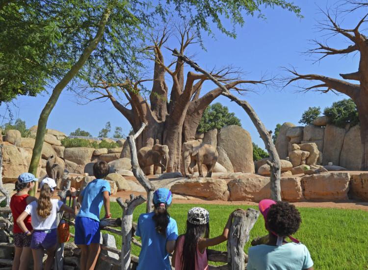 Enriquecimiento ambiental de elefantes. Bioparc Valencia