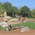 Experiencias Bioparc - La sabana africana - Bioparc Valencia 2015