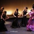 Flamenco de Cristal.
