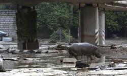 Hipopotamo por la ciudad de Tiflis