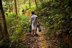 IKEA y FAO unen su ezfuerzo para mejorar los bosques de Vietnam.