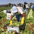 Un inmigrante trabajando en el campo.