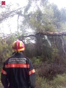 Los Bomberos de Castellón intervienen ante la caída de un árbol en Onda (Castellón).