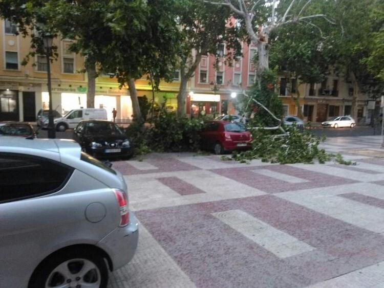 Ramas de un árbol caídas en pleno centro de Xàtiva. Foto: Consorcio Provincial de Bomberos.