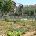 hortalizas-urbanas