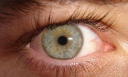 1280px-My_eye