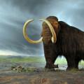 El-calentamiento-del-clima-provoco-la-gran-extincion-de-la-megafauna_image_380