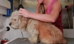 El perro vagabundo que consiguió hogar tras un cambio de imagen